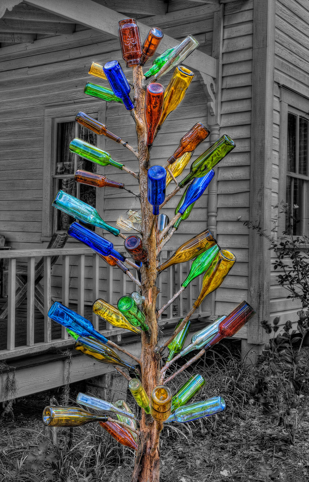 Bottle Tree Selective Color