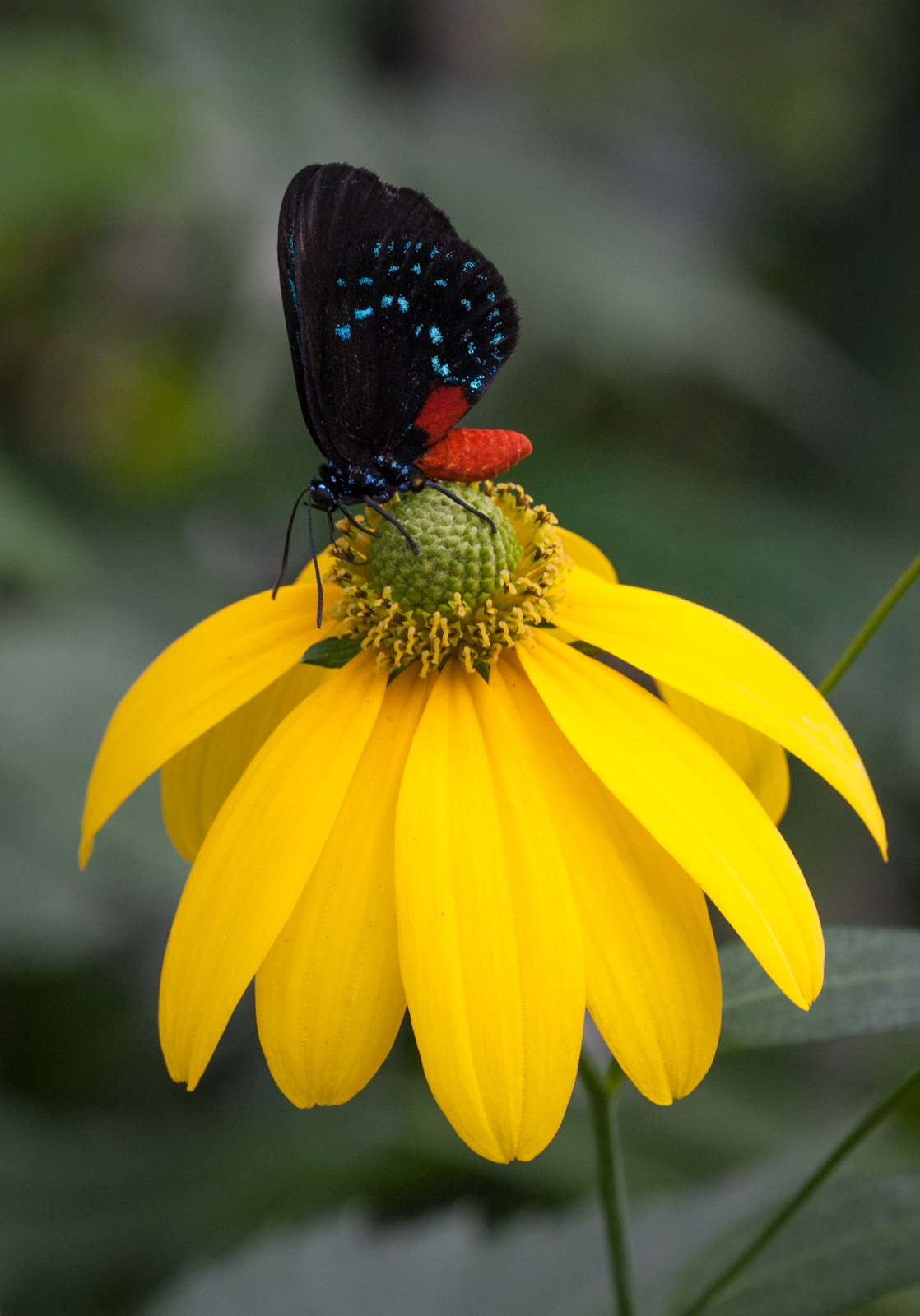 Butterfly Garden Matthew Paulson Photography