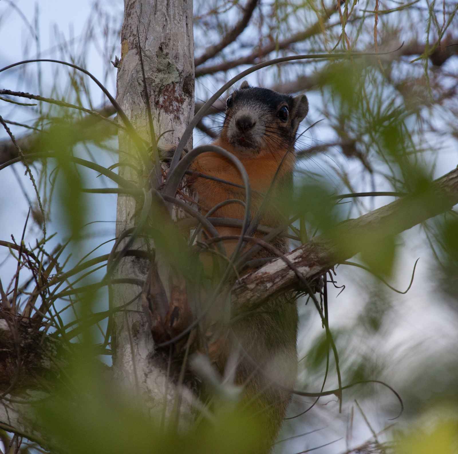 Big Cypress Preserve Sightings