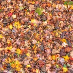 Fall Leaves Carpet