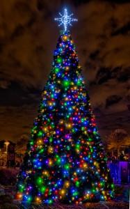 Curtis Hixon Park Christmas Tree