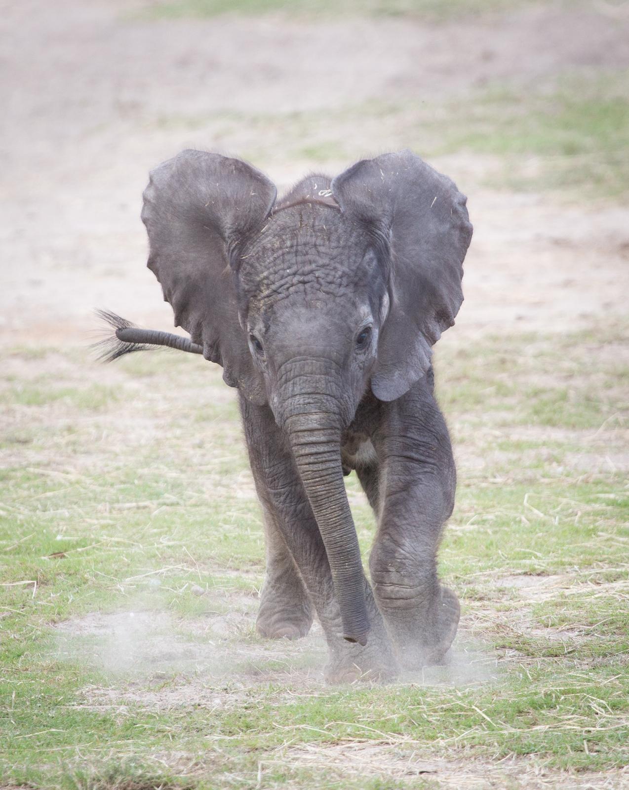 Lowry Park Zoo – Baby Elephant