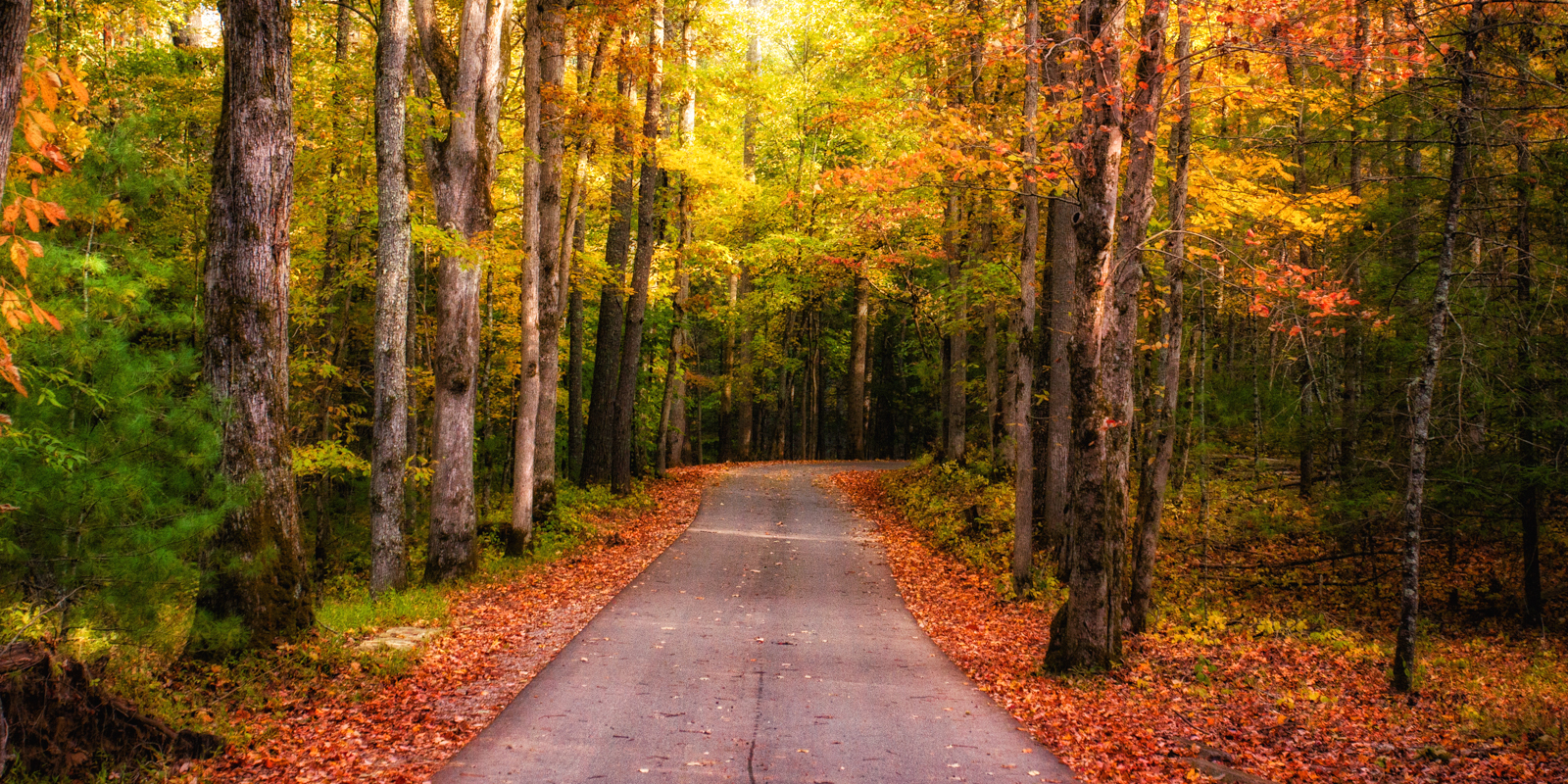 Fall In The Smoky Mountains Matthew Paulson Photography