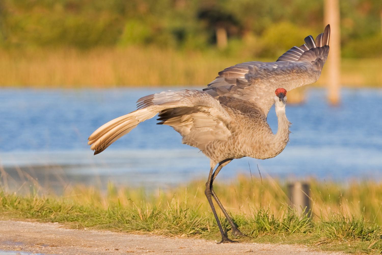 Birds of Viera