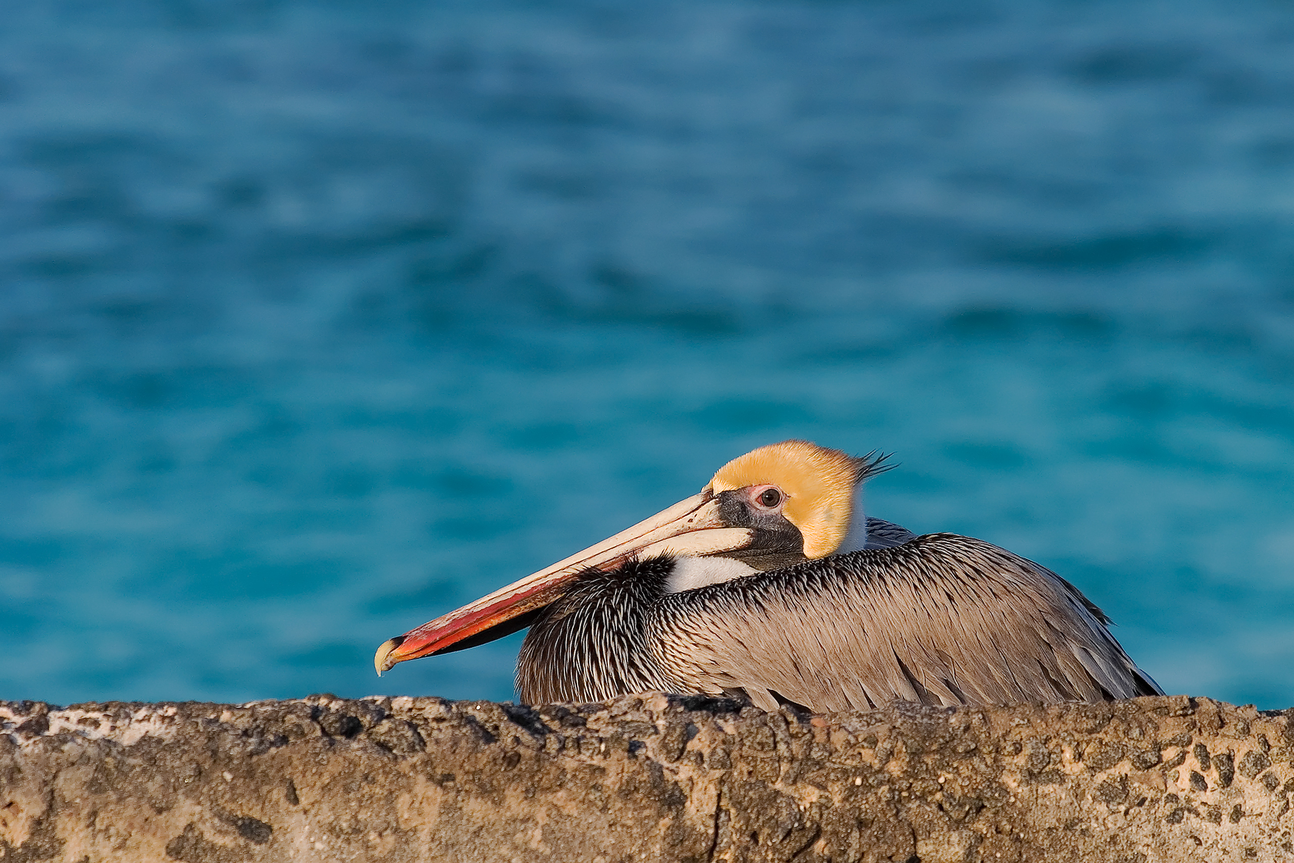 Birding in Dry Tortugas National Park