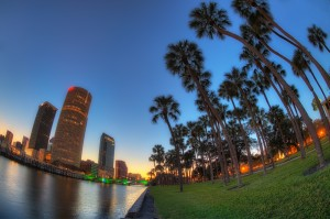 Downtown Tampa and Plant Park Palms Fisheye