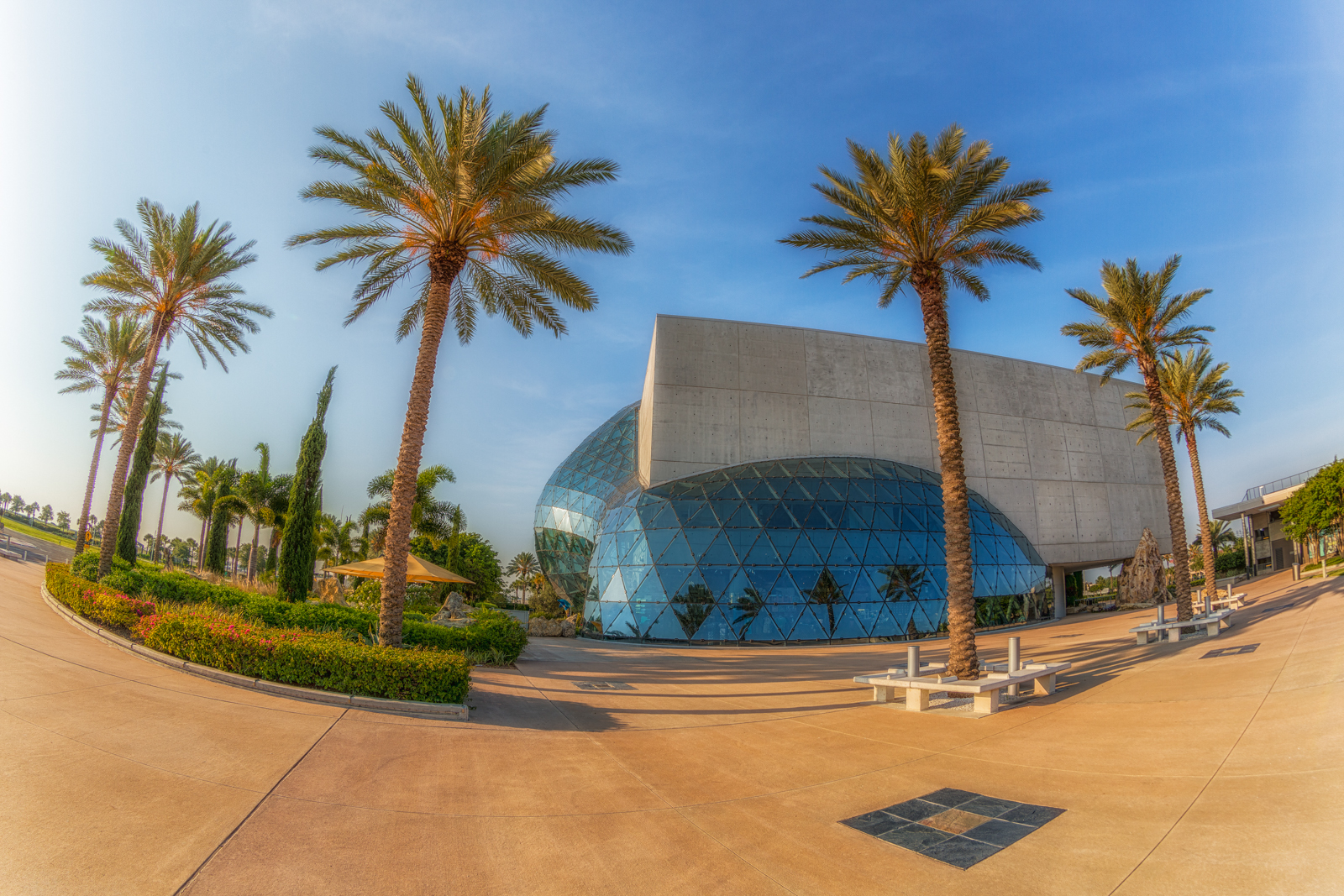 St Petersburg Palm Trees plus Dali Museum and Mahaffey Theater
