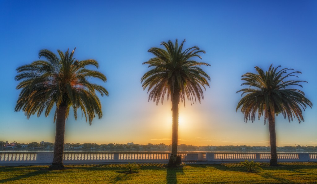 Bayshore Blvd Palms Sunrise