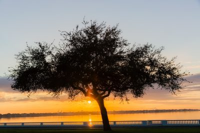 Bayshore Oak Sunrise