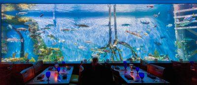 Guy Harvey Outpost - Tradewinds Resort