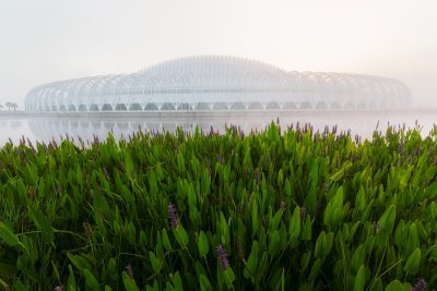 Pickerel Weed and Florida Polytechnic Institute in Fog
