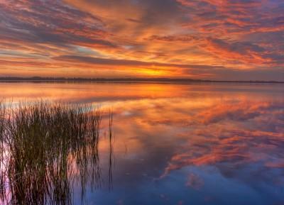 Reeds Sunrise