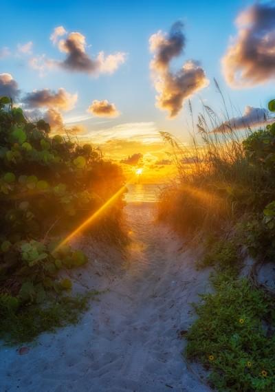 Sunbeam along the path