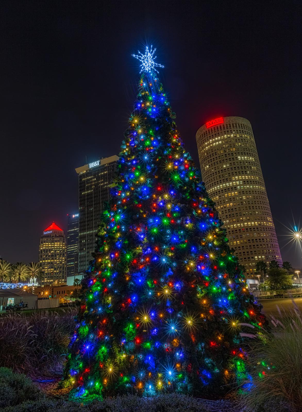 Tampa's Christmas Trees | Matthew Paulson Photography