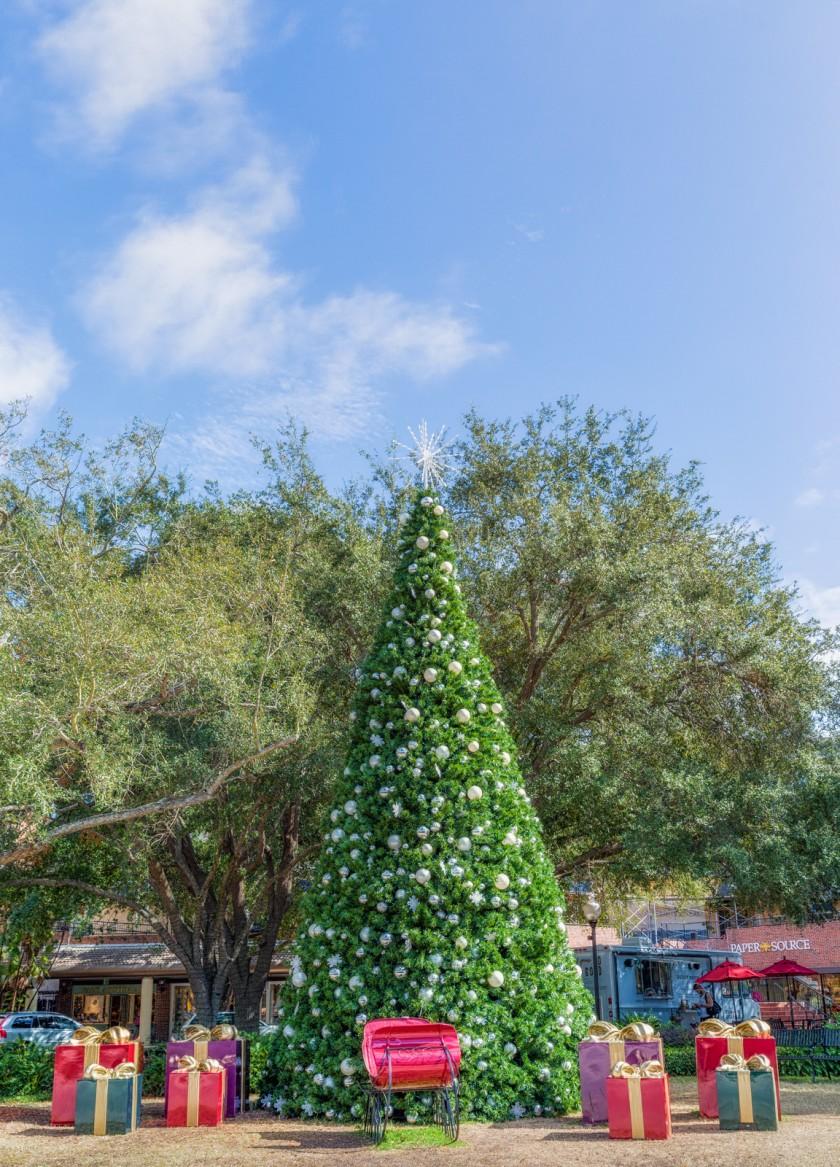 Tampa's Christmas Trees