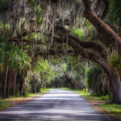 Canopy over Myakka River State Park Road, Sarasota, Florida
