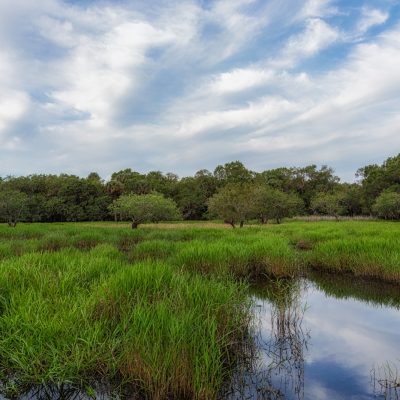 Sky and Reflection, Myakka River State Park, Sarasota, Florida