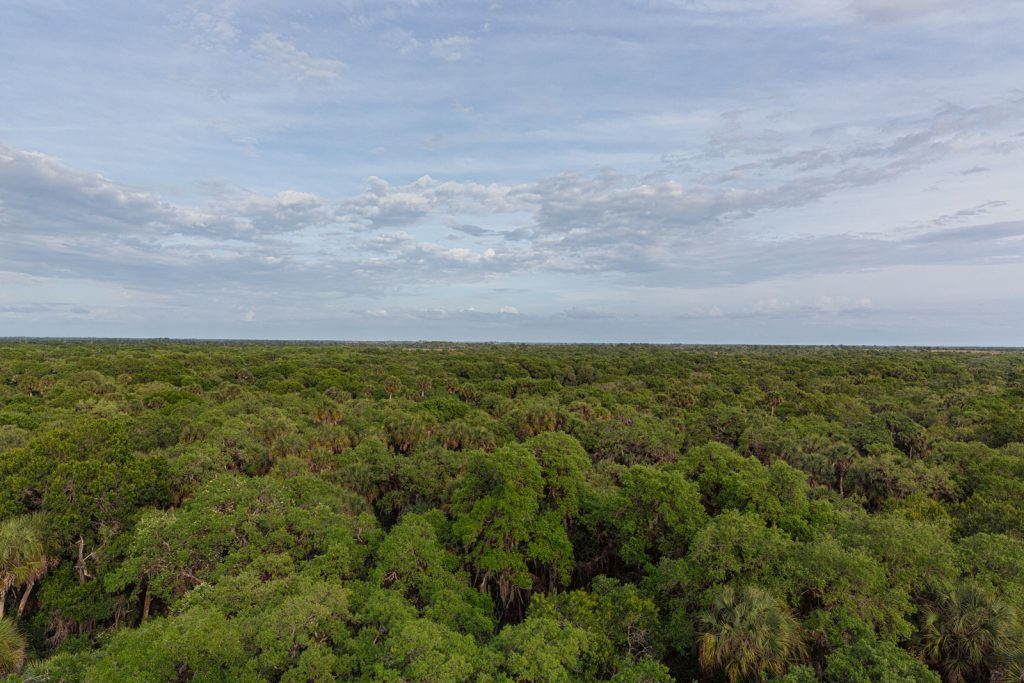 View from Top of Canopy Walk, Myakka River State Park, Sarasota, Florida