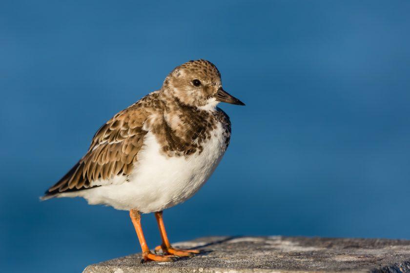 Fort Desoto Birds