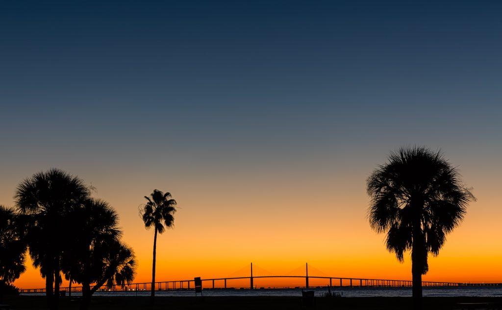 Skyway Bridge Sunrise between the Palm Trees, St Petersburg, Florida