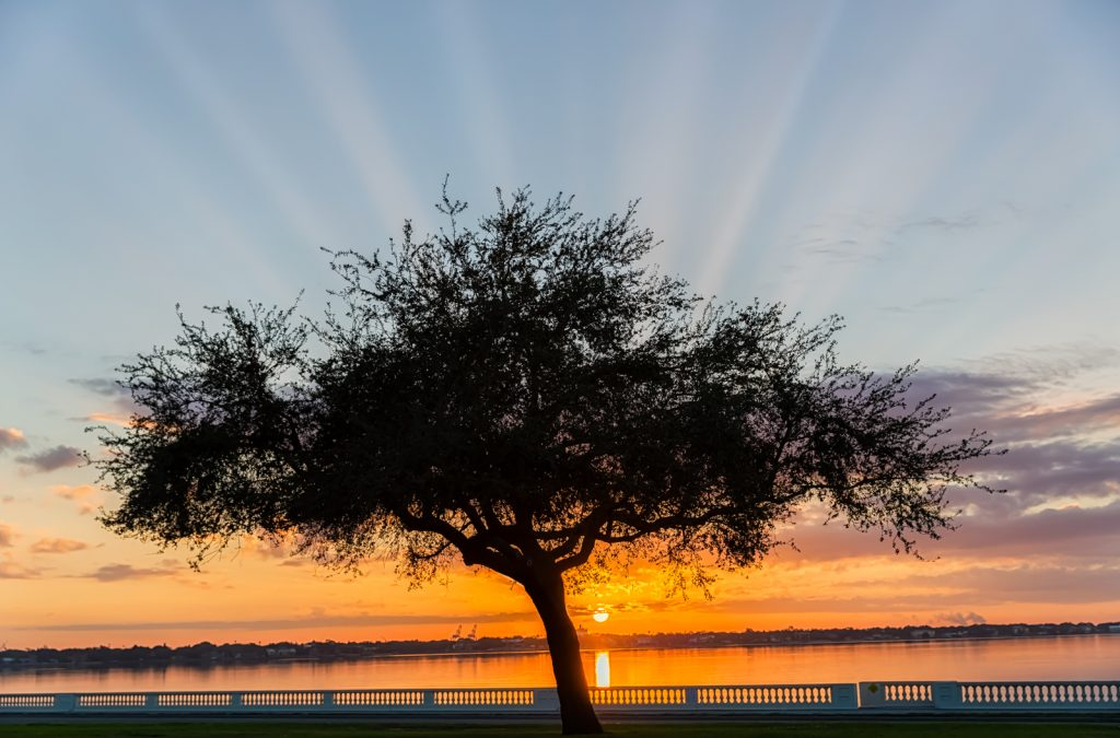 Bayshore Sunrise with Crepuscular Rays, Tampa, Florida