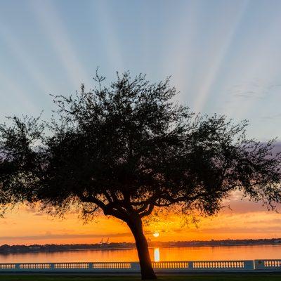 Bayshore Sunrise with Crepuscular Rays, Tampa, Florida