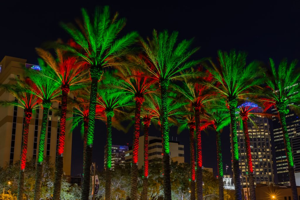 Christmas Palms Tight, Tampa, Florida