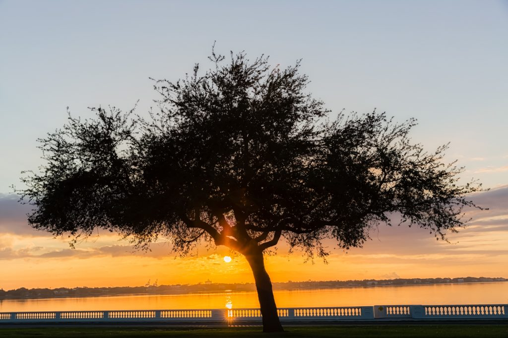 Bayshore Oak Sunrise, Tampa, Florida