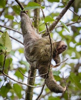 Slothful Saturday