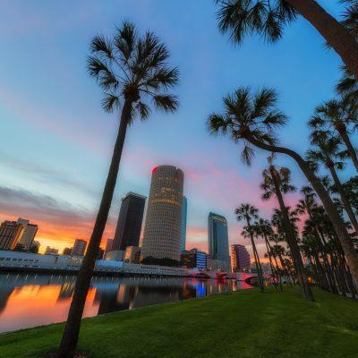 Tampa Palm Sunrise Vertical 2, Tampa, Florida