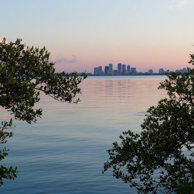 Tampa Between the Mangroves, Tampa, Florida