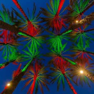 Tampa Christmas Palms, Tampa, Florida