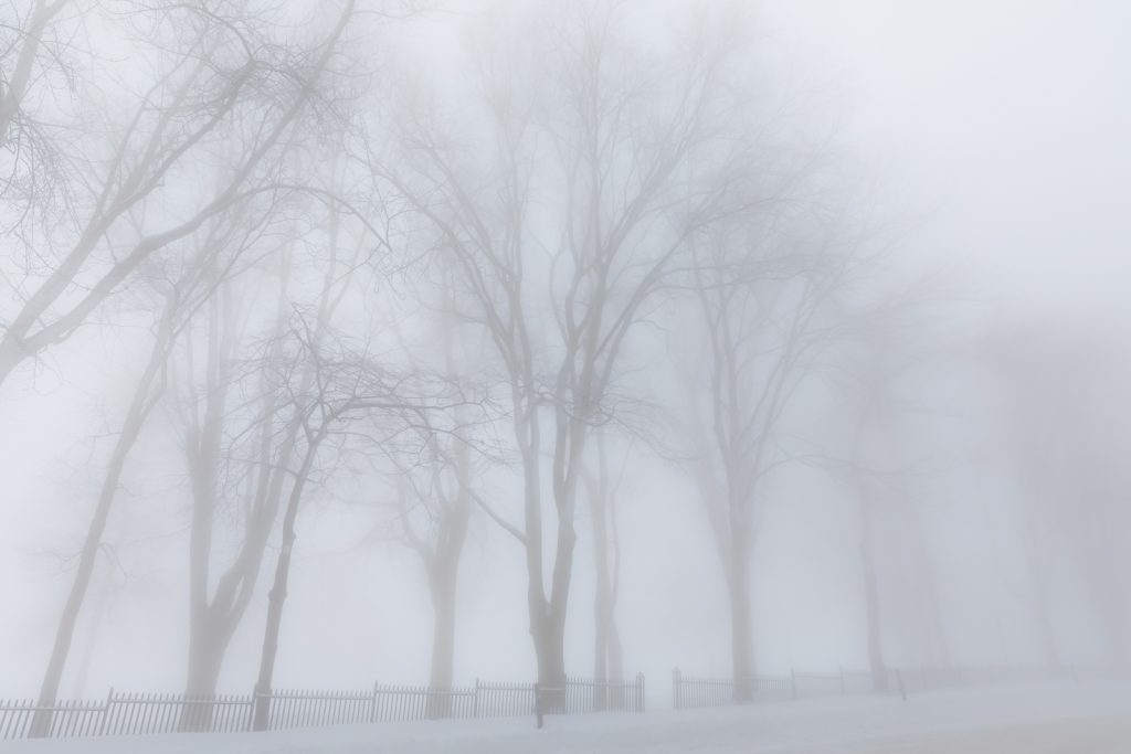 Ghostly Trees in Quebec City
