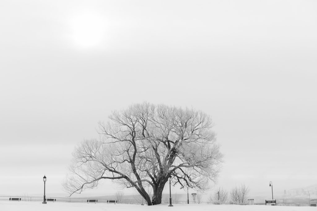 Snowy Tree Black and White