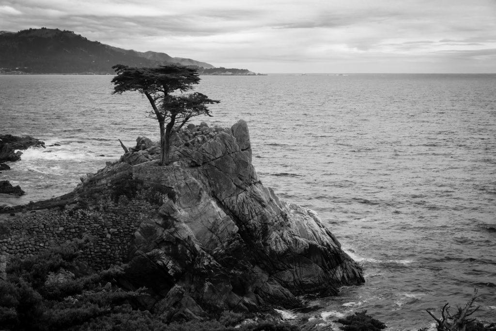 The Lone Cypress BW, 17 Mile Drive, Pebble Beach, California